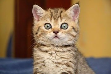 имена для котов мальчиков элитных и обычных пород