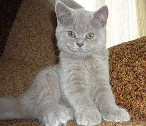 Советы и рекомендации по выбору имени для кота мальчика