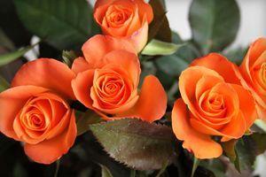 К чему дарят желтые или оранжевые розы: значение