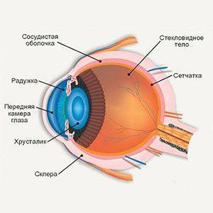 Anatomske strukture oka