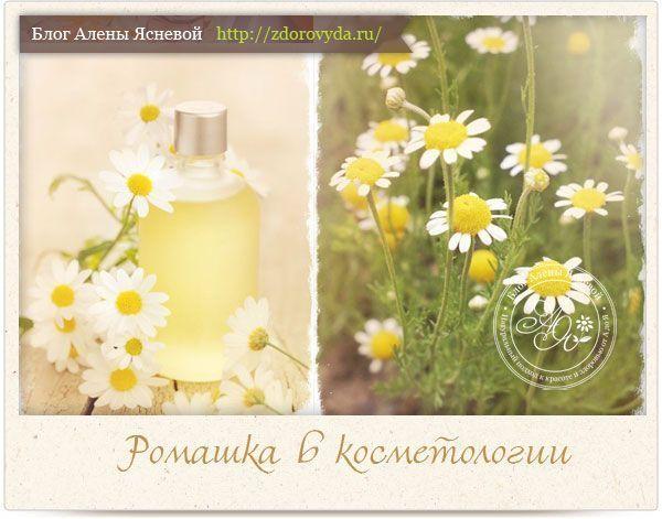 Ромашка аптечная — все про любимый цветок косметологов